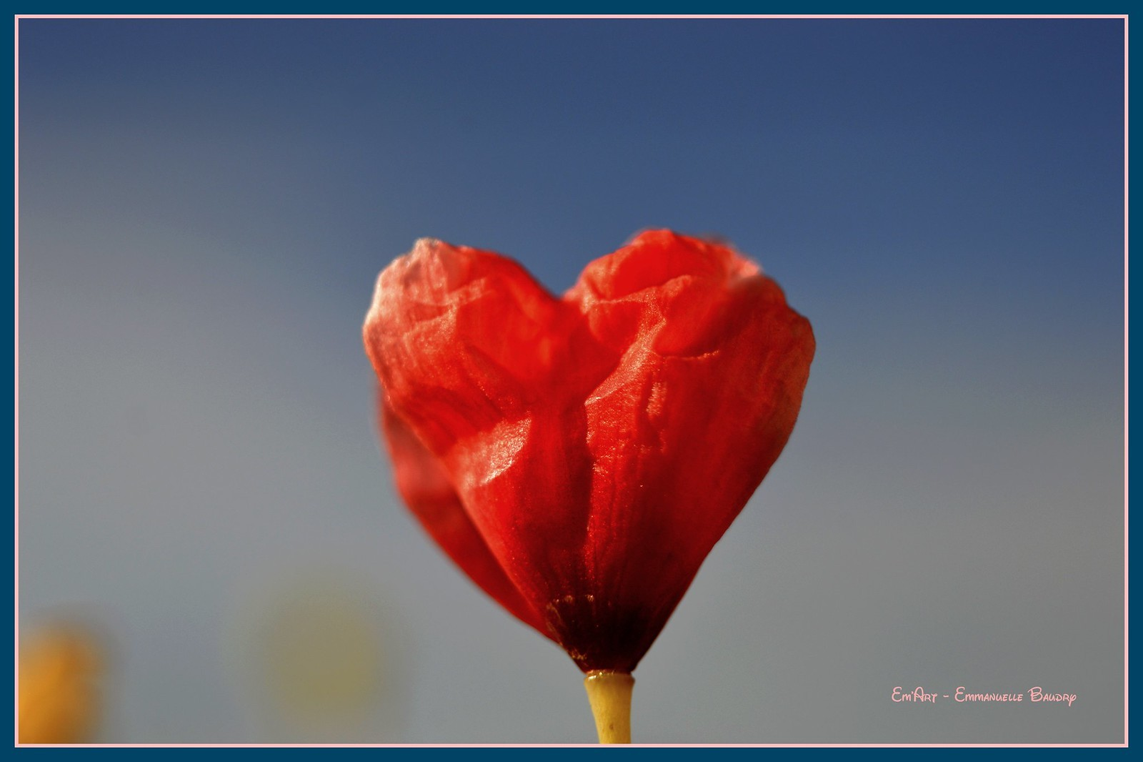 Poppy Hearted