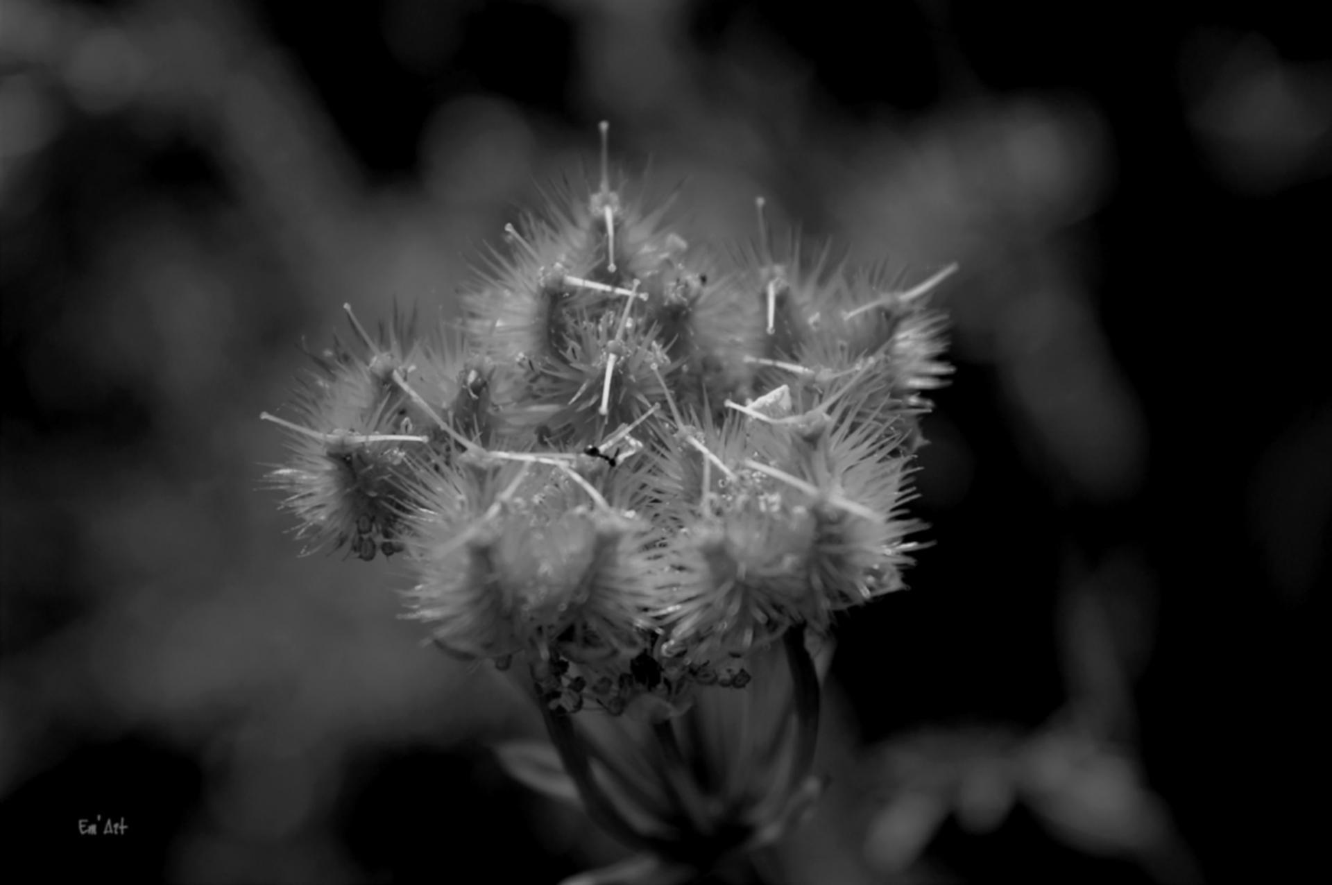 Série beauté nature VII