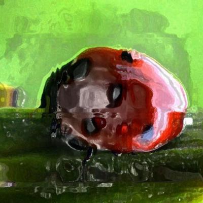 En rouge et noir 30x40 cm 8mo