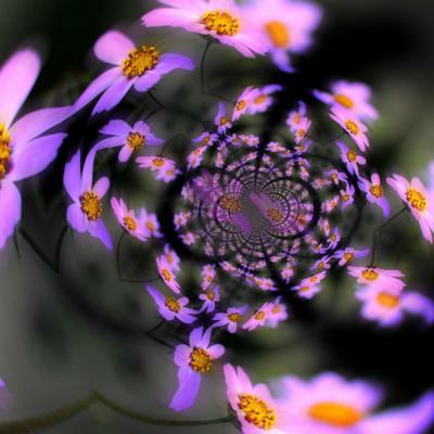 Fleurs mauves fractales radial 18 x 24
