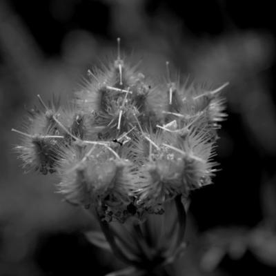 Serie beaute nature 10 mo